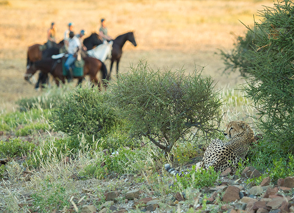 Horseback riding with cheetah